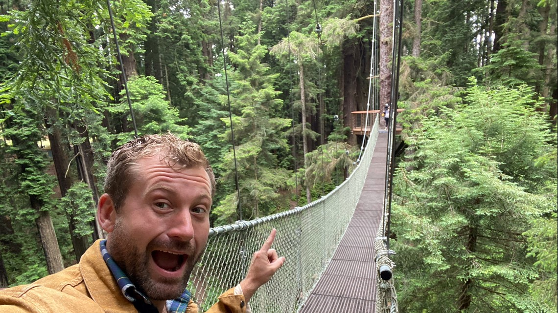 Experience the 'wood wide web' of the Redwood Sky Walk   Bartell's Backroads
