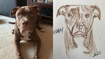Sacramento SPCA staff and volunteers draw pet portraits for donations