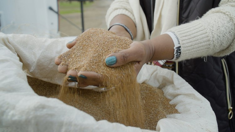 This Ethiopian grain could be California's new superfood | NorCal Strong