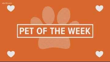 Pet of the Week: Rocky Road