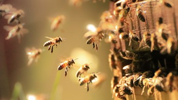 California beekeepers 'stung' by rash of hive thefts
