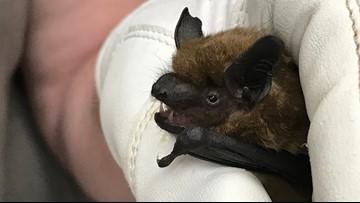 Hundreds flock to see migratory bats under I-80 Causeway