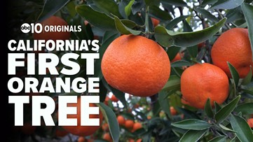 Bartell's Backroads: California's First Orange Tree