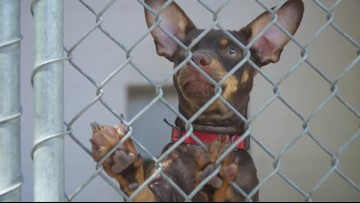 Front Street Animal Shelter set to open all days of the week