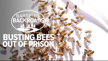 Bee Rescue in Folsom Prison | Bartell Backroads