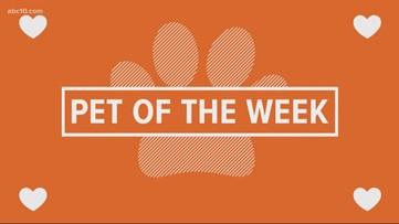 Pet of the Week: Bonnie
