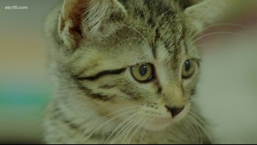 Sacramento County may cut community spay and neuter contracts