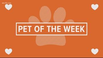 Pet of the Week: Bambi
