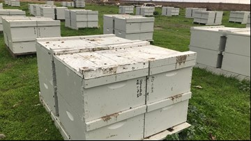Nearly 100 beehives stolen from Yuba City property. Owner believes it was another beekeeper