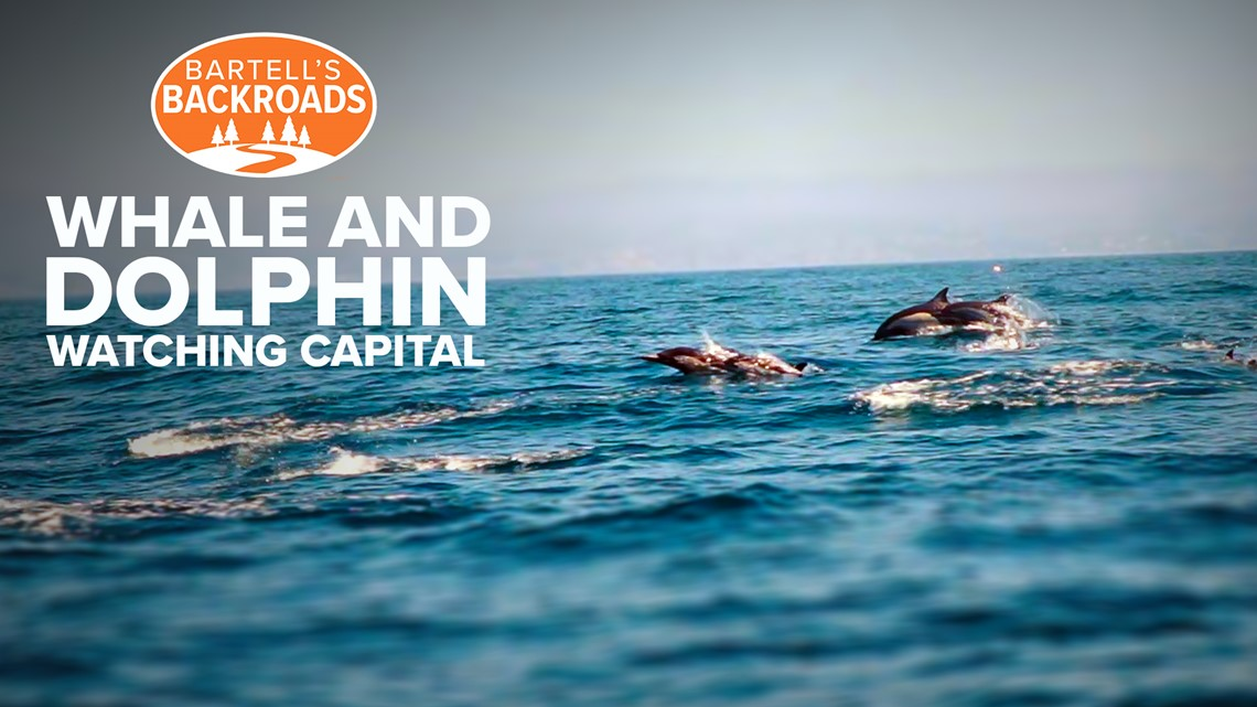 Unique geography makes Dana Point the 'Dolphin and Whale Watching Capital of the World'   Bartell's Backroads