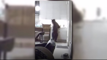 Residents rescued after bear breaks into Truckee home