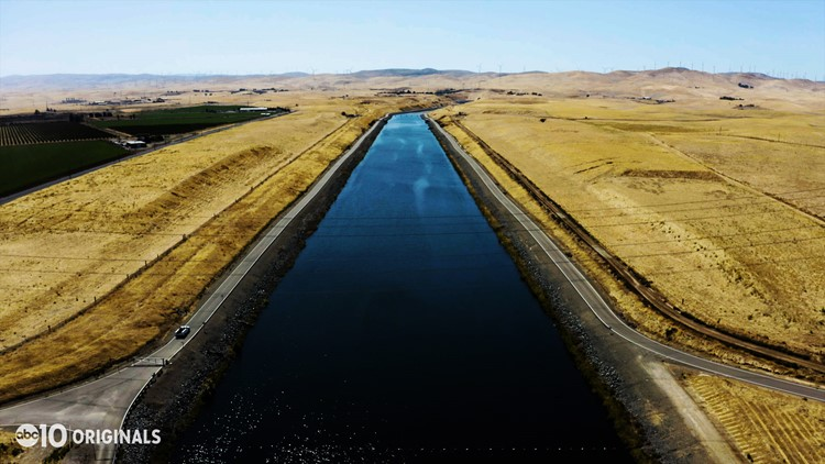 Delta smelt_A State Water Project