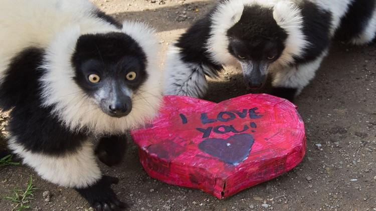 I Heart Sac Zoo
