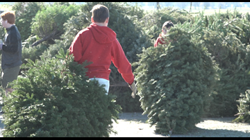 Roseville Boy Scouts round-up Christmas trees for recycling