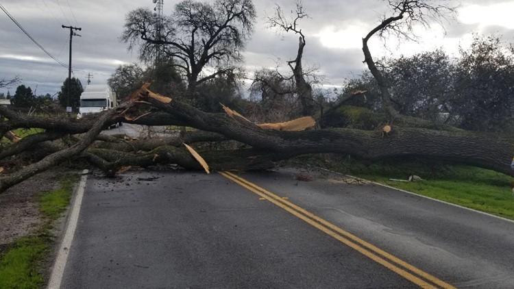 Tree down in Lodi