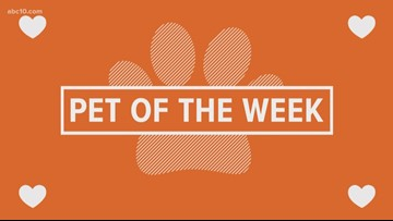 Pet of the Week: Bowser