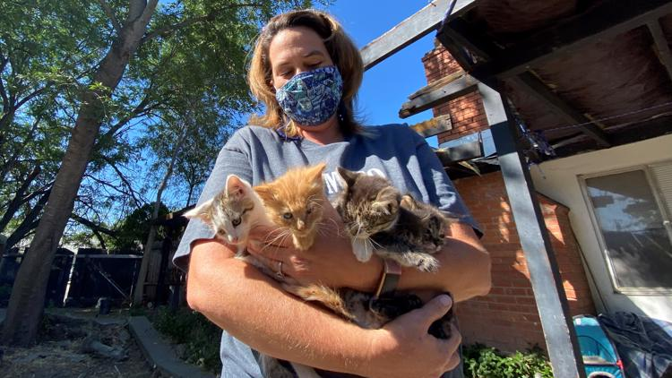 Rio Linda's feral cat trapper | NorCal Strong
