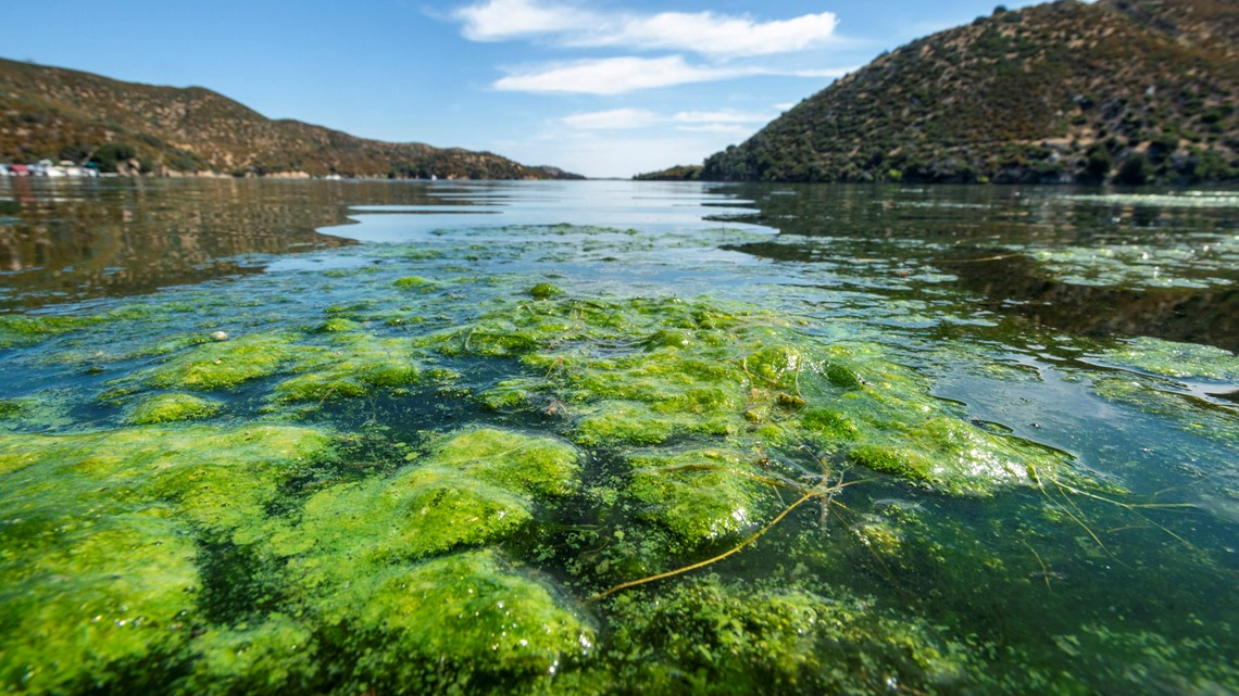 California issues toxic algae warnings ahead of Labor Day - ABC10.com KXTV