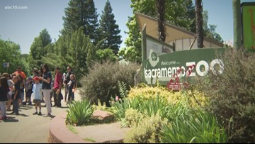 Does the Sacramento Zoo have to move to keep its accreditation? | VERIFY