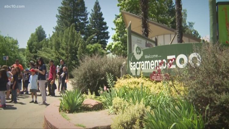 Does the Sacramento Zoo have to move to keep its accreditation?   VERIFY