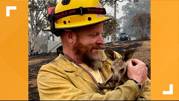 'That thing was so cute' | Lake Tahoe firefighter rescues baby Kangaroo from Australia bushfires