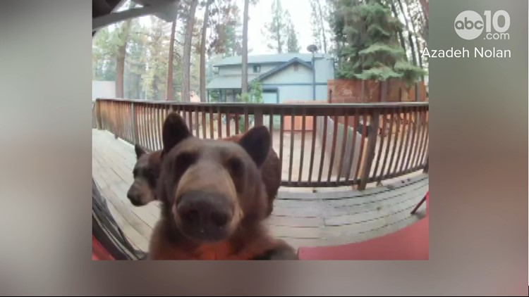 WATCH: Mama bear, 3 cubs activate doorbell camera on South Lake Tahoe cabin