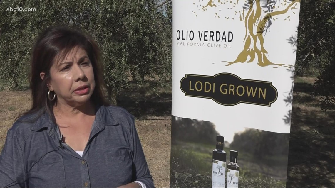 Lodi family with 300 olive trees in backyard start olive oil business