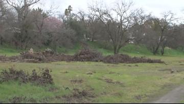 Roseville Police investgating after human remains found