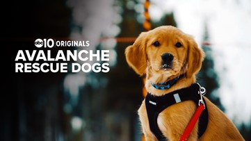 Meet the dogs at Alpine Meadows trained in avalanche rescues   ABC10 Originals