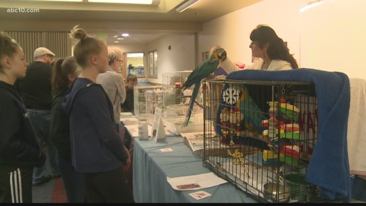 Carmichael Library hosts bird adoption fair