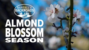 Beautiful drone video of Northern California almond blossoms | Bartell's Backroads