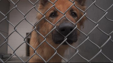 Generous donation allows free adoptions at Front Street Animal Shelter until 2020