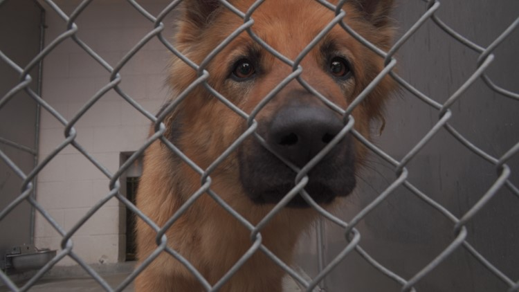 The last year has not been so ruff for Sacramento's Front Street Animal Shelter