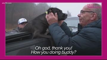 HeartThreads: Dog returned to owners after escaping violent car crash