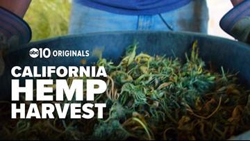 California Hemp Harvest