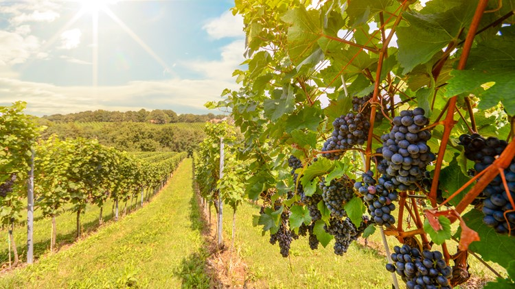 1091537966 vineyard thinkstock photo
