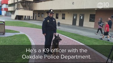 Oakdale police dog puts his life on the line for public safety