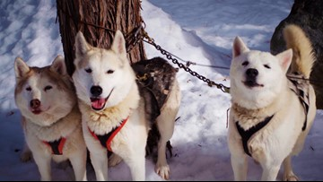 The sled dogs of Plumas County | Bartell's Backroads