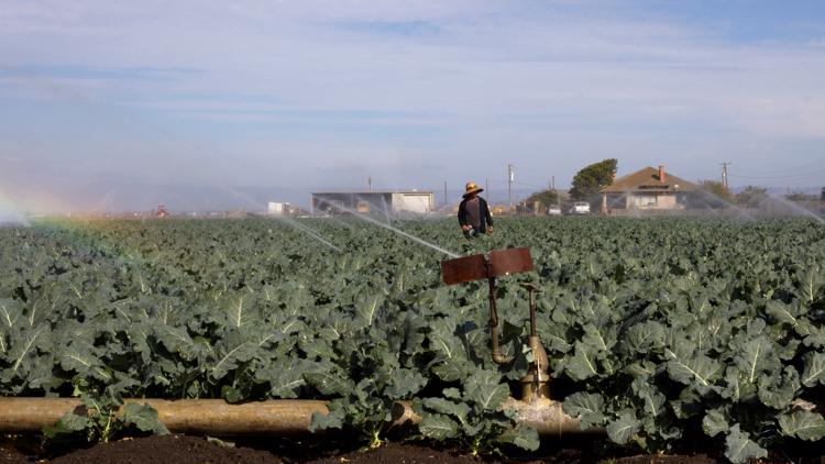 calmatters farm