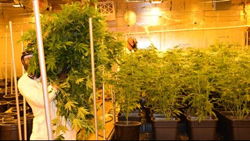 Rancho Cordova hires new officer to bust illegal marijuana grows