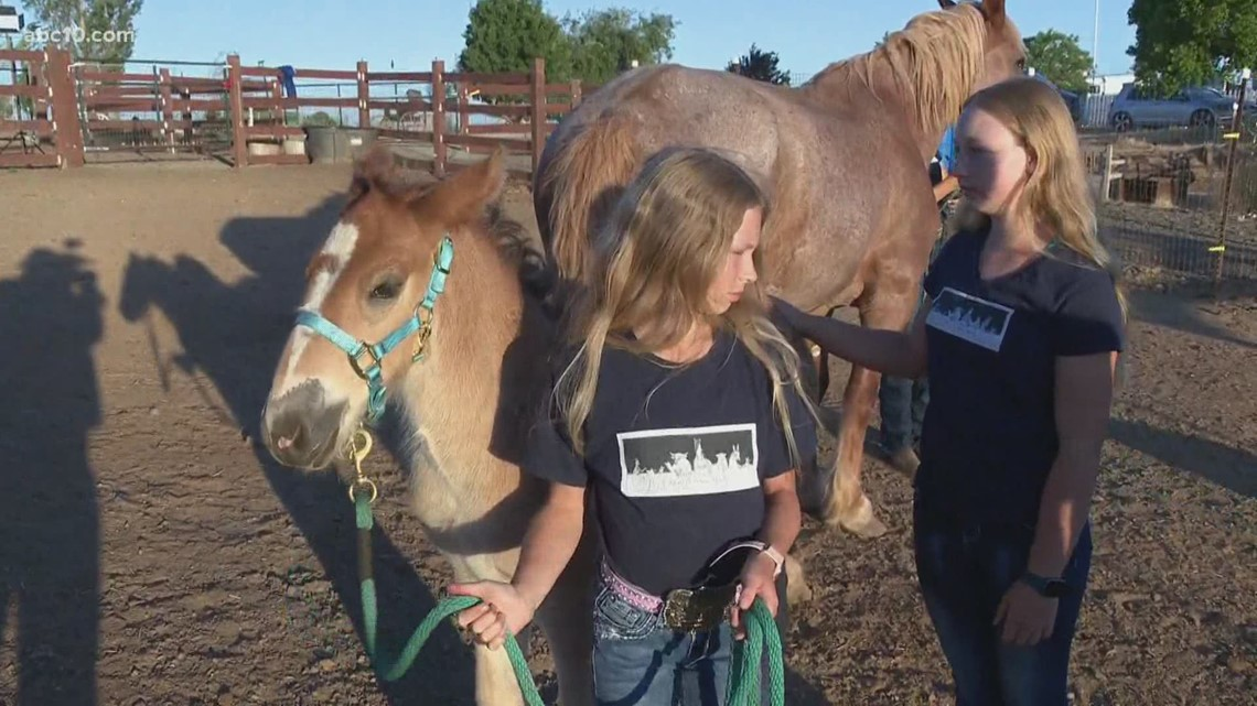 Giddy up! El Dorado County horse ranch works with non-profits for animal therapy