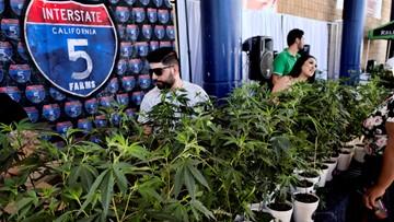 Hidden in plain sight: California illegal pot market booming