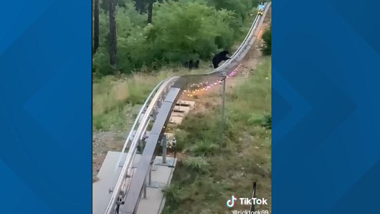 TikTok video shows mountain coaster rider's close encounter with bear & cubs