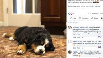 Funeral home uses puppy to help grieving families