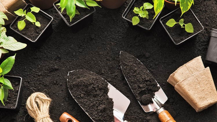 Lowe's is giving away free gardening kits in April, here's how to sign up