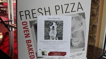 Charlotte pizza shop is putting photos of adoptable dogs on their pizza boxes