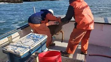 Oh, deer! Maine fishermen snag unusual catch from the ocean