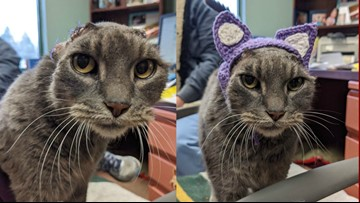 Animal lover crochets cat without ears a new set of purple ones