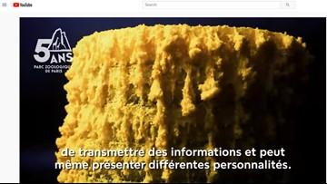 Paris zoo debuts 'The Blob' organism with no brain, 720 sexes