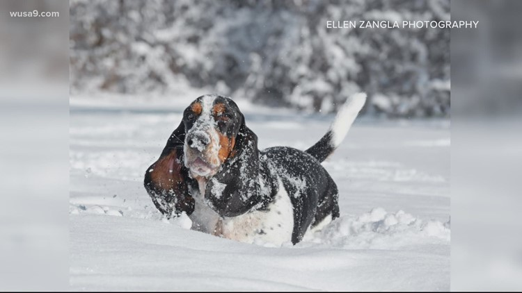 Nothing is more uplifting than dogs playing in the snow